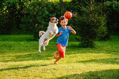 ボールで一緒に遊ぶ犬と子供