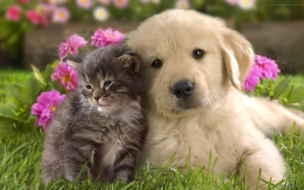 子犬と子猫の写真