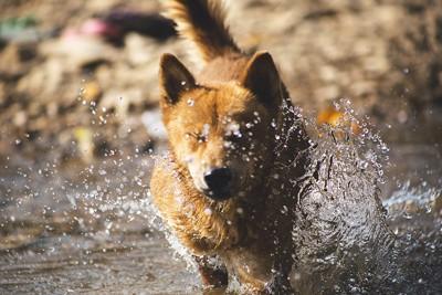 犬の優れた動体視力
