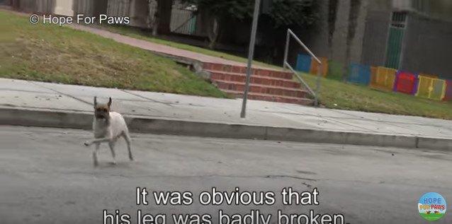 前足を突き出して走る犬