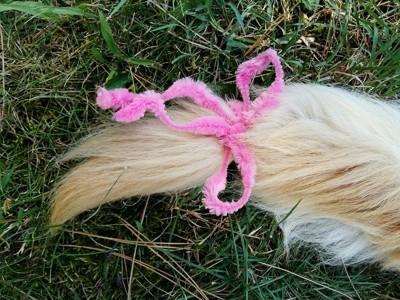 リボンを巻いた犬のしっぽ