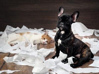 トイレットペーパーにくるまる犬と猫