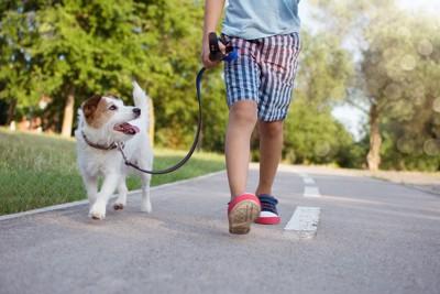 横に並んで歩く子供と犬