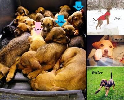 引き取られた犬たち