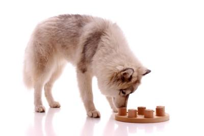 積み木と犬