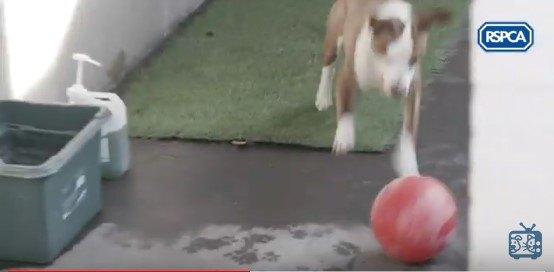 ボールを追う犬