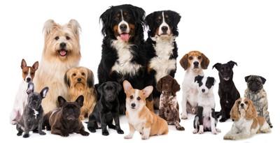 大小様々な犬種