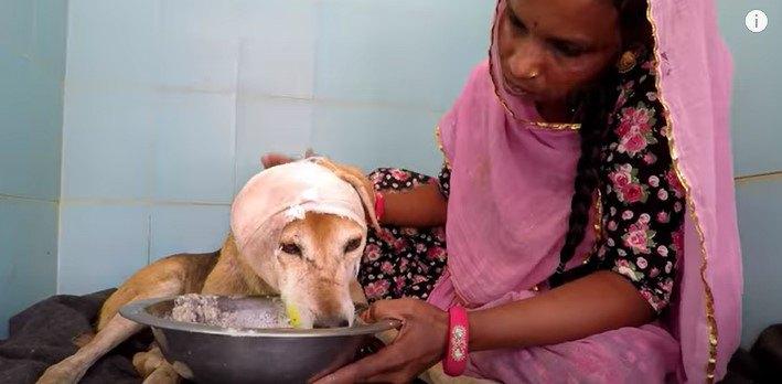 流動食をたべる犬