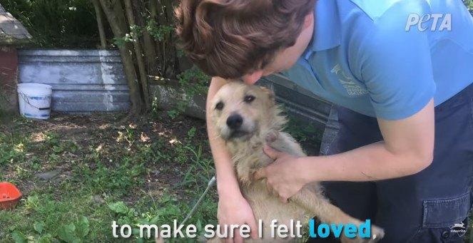 人に抱えられる犬