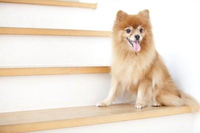 階段に座っている犬