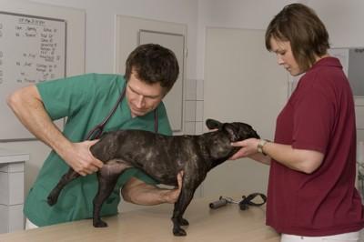 足の診察を受ける犬