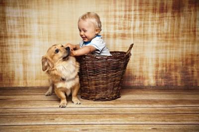 かごに入った赤ちゃんに触られる犬