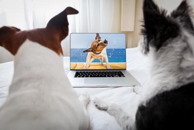 PC画面を見る犬たち
