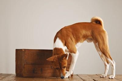 床の匂いを嗅ぐ犬