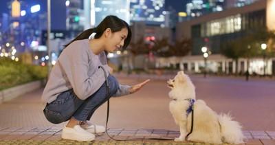 散歩中トレーニングする犬と女性