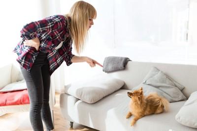ソファーの上の犬を叱る女性