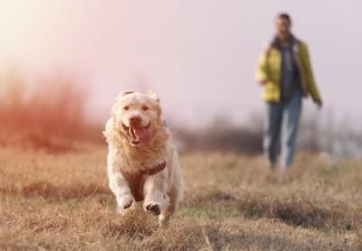 走る犬と背後に立つ飼い主