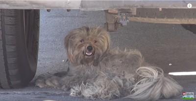 車の下に横たわる犬