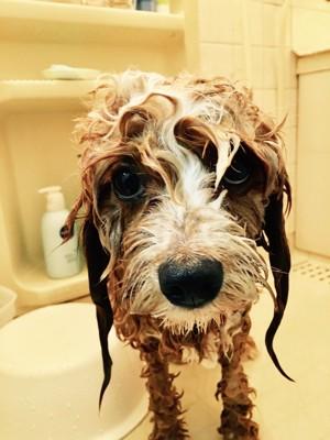 お風呂場での愛犬