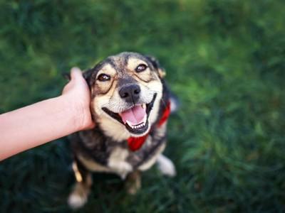 頭を撫でられて嬉しそうな犬