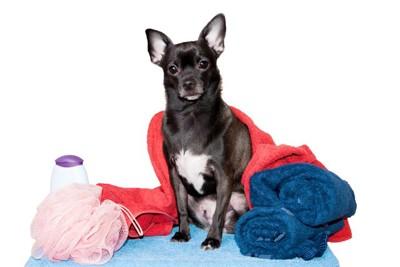 お風呂グッズに囲まれた犬