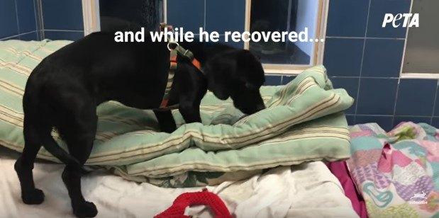 療養中の部屋を確認する犬