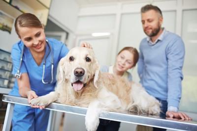 笑顔で犬を診察する獣医師と飼い主