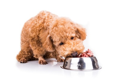 豚肉を食べる犬