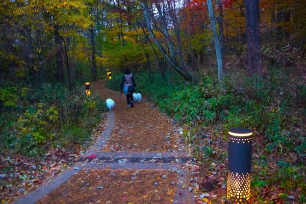 森の中の散策路