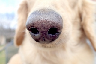 #犬の鼻のアップ写真#