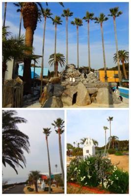 椰子の木がある園内
