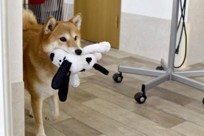 人形を咥えている犬