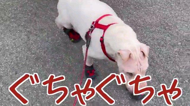 ぐちゃぐちゃ~字幕