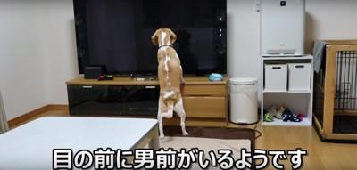 テレビうぃるくん