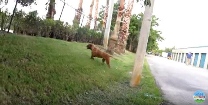 道路脇の芝生を歩く犬
