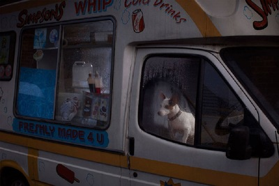 トラックの中にいる白と茶色の犬
