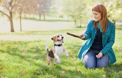 枝を投げてもらおうとしている犬