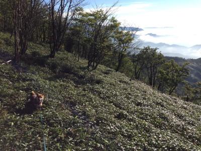 柴犬と雲海