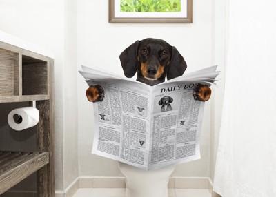 トイレで新聞を読む犬