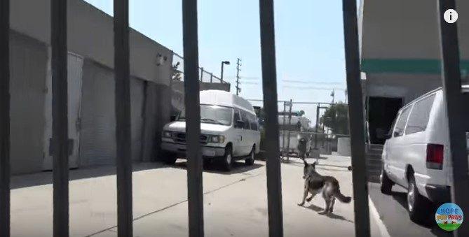 クリニックの敷地に誘導された犬