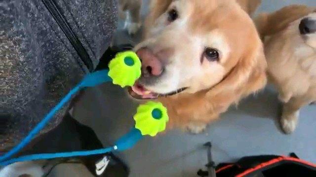 マッサージ機を見る犬