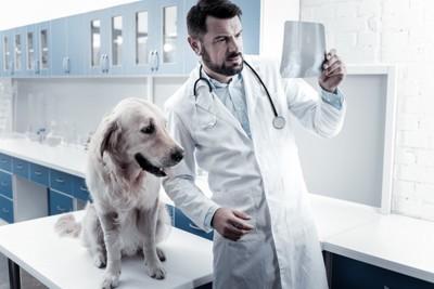 レントゲン写真を見ている獣医と犬