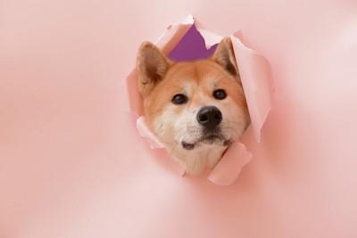穴から顔を出す犬