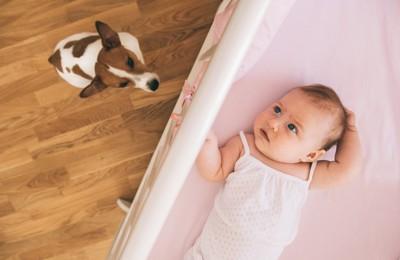 赤ちゃんを下から見ている犬