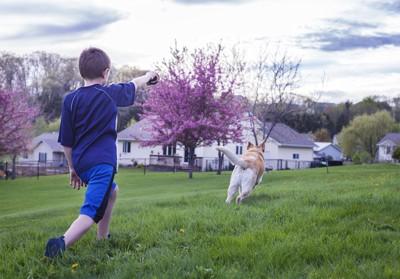 男の子の走る犬の後ろ姿