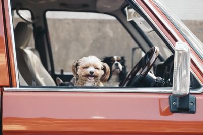 車の中から顔を出す犬