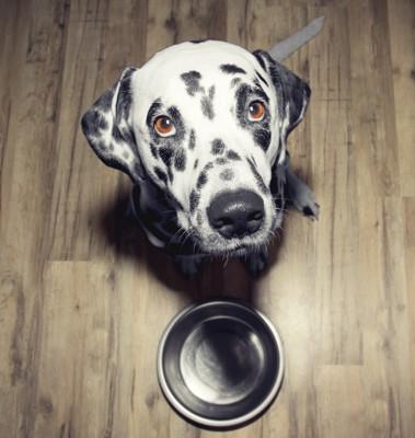 空のお皿をくわえる犬