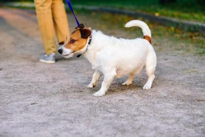 散歩中にリードを引っ張っている犬