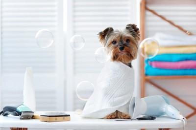 シャンプーのシャボン玉と犬
