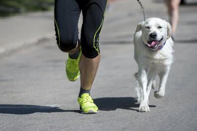 飼い主と一緒にマラソンをする犬